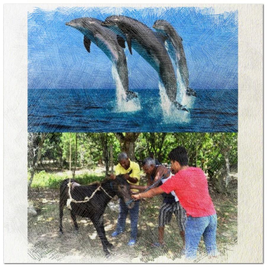 ¿Delfín o Mulo?